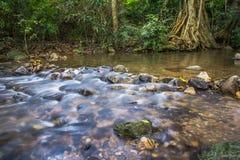 Immagine del fondo degli alberi e degli scorrimenti dell'acqua tramite il percorso roccioso o Fotografie Stock