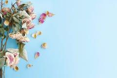 Immagine del fondo di autunno delle rose asciutte con lo spazio della copia Immagine Stock
