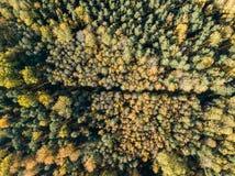 immagine del fuco vista aerea di zona rurale con i campi e le foreste i fotografia stock