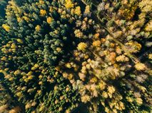 immagine del fuco vista aerea di zona rurale con i campi e le foreste i immagine stock libera da diritti