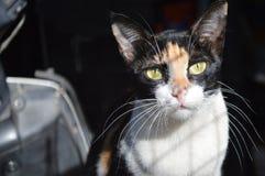 Immagine del gatto Fotografie Stock