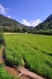 Immagine del giacimento del riso, a nord della Tailandia Fotografia Stock