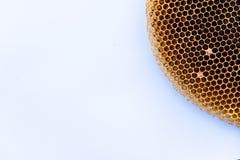 Immagine del nido asciutto e vuoto dell'ape su Libro Bianco Fotografia Stock