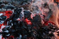 Immagine del nuovo anno e di Natale cartolina Forest Fir Cones su fuoco Fotografia Stock
