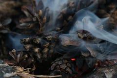 Immagine del nuovo anno e di Natale cartolina Forest Fir Cones su fuoco immagine stock