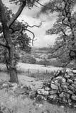 Immagine del paesaggio della vista dalla passeggiata del precipizio in overloo di Snowdonia fotografie stock libere da diritti