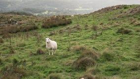 Immagine del paesaggio della vista dalla passeggiata del precipizio in overloo di Snowdonia fotografia stock libera da diritti