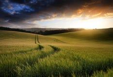 Immagine del paesaggio di estate del giacimento di grano al tramonto con la bella l Immagine Stock Libera da Diritti