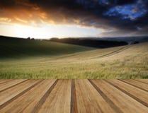 Immagine del paesaggio di estate del giacimento di grano al tramonto con la bella l Fotografia Stock Libera da Diritti