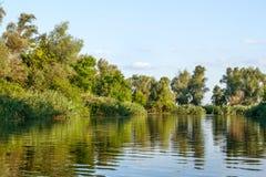 Immagine del paesaggio di grande vegetazione della riva del fiume Fotografia Stock