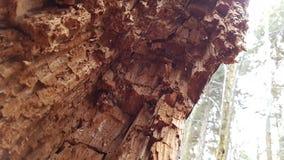 Immagine del percorso allo Schwellhäusel nella foresta bavarese (Germania) Fotografie Stock Libere da Diritti