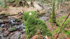 Immagine del percorso allo Schwellhäusel nella foresta bavarese (Germania) Fotografia Stock