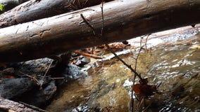 Immagine del percorso allo Schwellhäusel nella foresta bavarese (Germania) Fotografia Stock Libera da Diritti