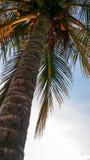 Immagine del primo piano della palma all'alba immagine stock