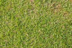 Immagine del primo piano della priorità bassa dell'erba verde Fotografie Stock