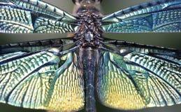 Immagine del primo piano della scrematrice della farfalla fotografia stock libera da diritti