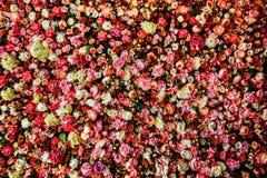 Immagine del primo piano di bello fondo della parete dei fiori Fotografia Stock