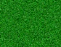 Immagine del primo piano di erba verde fresca Immagine Stock