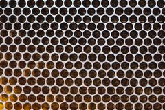 Immagine del primo piano di un favo che è preparato per la stagione immagini stock