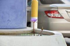 Immagine del primo piano del loto porpora del fiore nello stagno concreto fotografia stock libera da diritti