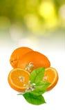 Immagine del primo piano maturo dell'arancia dolce immagine stock libera da diritti