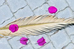 Immagine del ramo asciutto della palma che si trova sulla pavimentazione in piastrelle con flusso rosso Fotografia Stock