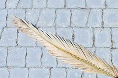 Immagine del ramo asciutto della palma che si trova sulla strada delle mattonelle Fotografie Stock Libere da Diritti