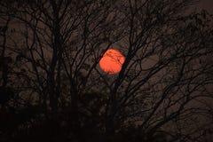 Immagine del Sun alla sera fotografia stock