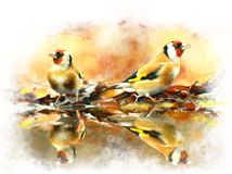 Immagine dell'acquerello del fringillide dell'oro degli uccelli Fotografie Stock Libere da Diritti