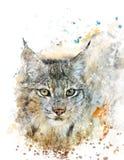 Immagine dell'acquerello di Lynx Immagini Stock