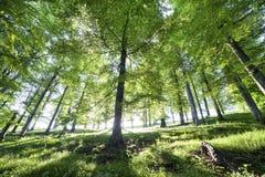 Immagine dell'alberi in foresta Immagini Stock Libere da Diritti