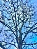 Immagine dell'albero immagini stock libere da diritti