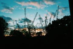 Immagine dell'albero di tramonto Immagini Stock