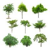 Immagine dell'albero, oggetto dell'albero, JPG dell'albero, insieme della raccolta dell'albero isolato Fotografia Stock Libera da Diritti