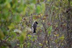 Immagine dell'uccello che si siede sul ramo Fotografia Stock Libera da Diritti