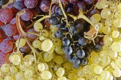 Immagine dell'uva, osservazione dell'uva, immagine dell'uva immagini stock libere da diritti