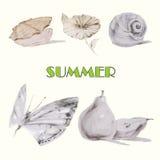 Immagine della conchiglia, del fiore, della lumaca, del butterflie e della pera illustrazione vettoriale