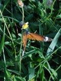 Immagine della farfalla immagini stock libere da diritti