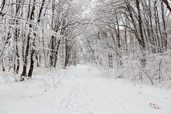 Immagine della montagna di Snowy Fotografia Stock Libera da Diritti