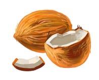 Immagine della noce di cocco Immagine Stock Libera da Diritti