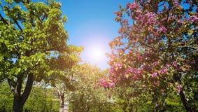 Immagine della primavera - incornici gli alberi con di giovane fogliame colorato multi ed il sole luminoso Immagine Stock Libera da Diritti