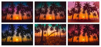 Immagine della raccolta dell'albero del cocco della siluetta sulla spiaggia al sole Fotografia Stock