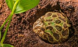 immagine della rana nel tempo di giorno dell'habitat fotografia stock