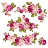 Immagine della rosa Fotografia Stock