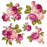 Immagine della rosa Immagine Stock