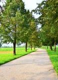Immagine della via del parco Fotografie Stock