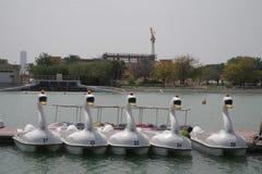 Immagine delle barche a forma di cigno del pedale su un lago pronto per il giorno fotografie stock