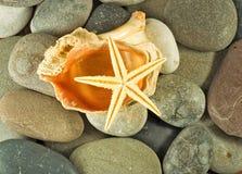 Immagine delle conchiglie e del primo piano delle pietre immagini stock