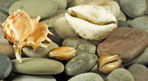 Immagine delle conchiglie e del primo piano delle pietre immagini stock libere da diritti