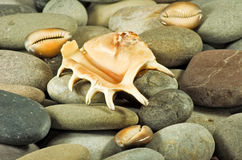 Immagine delle conchiglie e del primo piano delle pietre fotografia stock libera da diritti